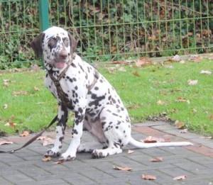 bild29_welpentreffen_november_2010