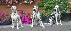 Emma, Elvis und Maggie