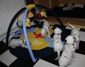 Das Babyspielzeug wird getestet