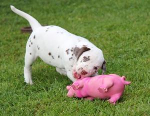 Frau Silber kaut dem Schwein ein Ohr ab.