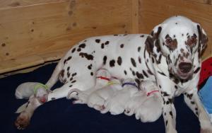 Die stolze Mama und ihre sechs Welpen