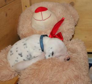 Herr Blau hat einen gemütlichen Schlafplatz